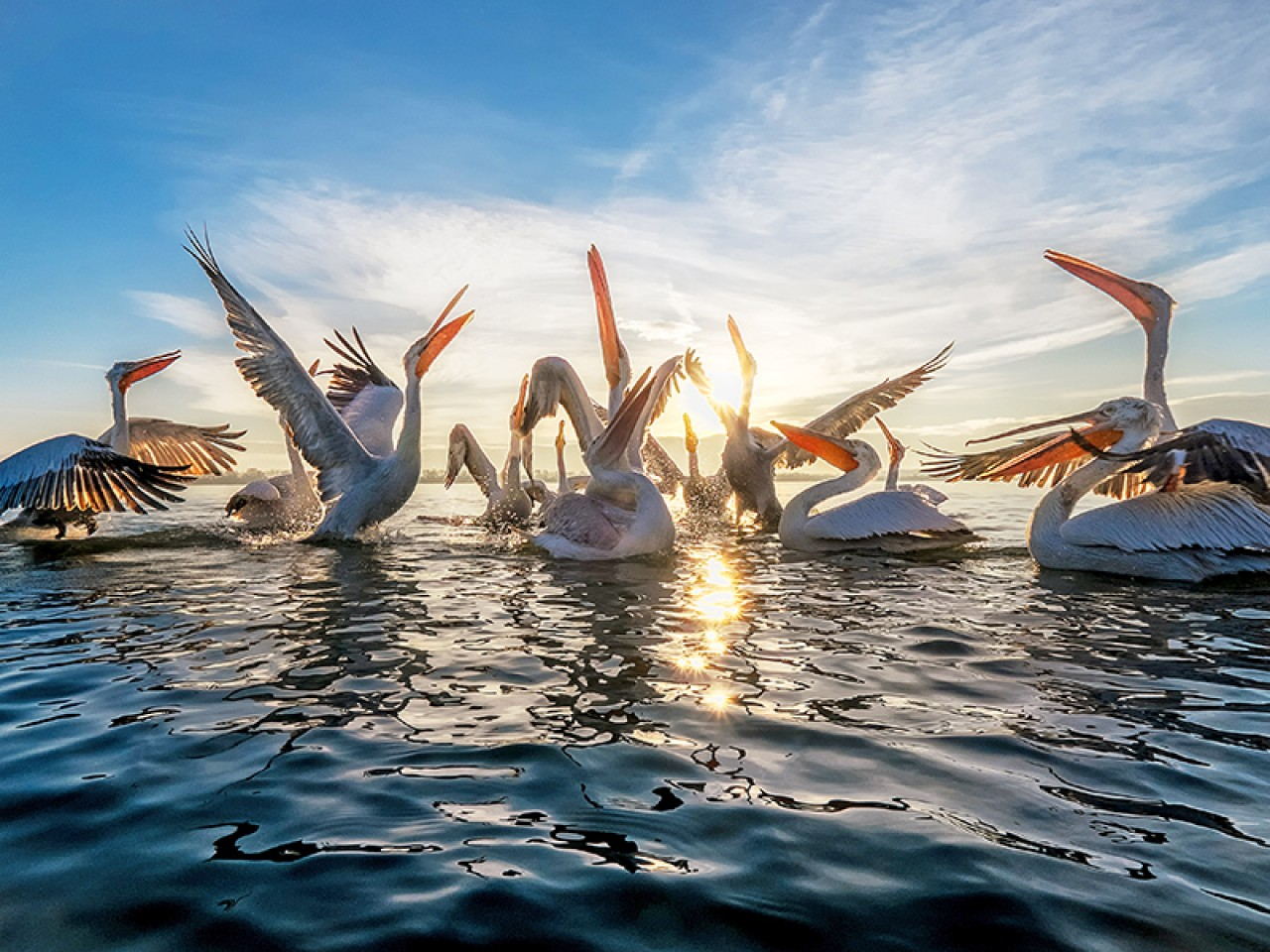 Day Tour to Lake Kerkini – with transfer